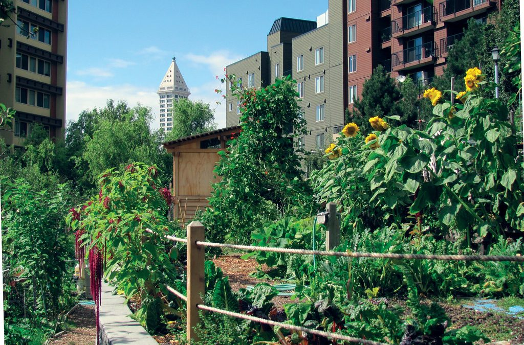 Eight Design Tips for Urban Food Gardens