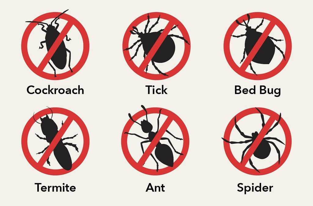 5 Strategies for Non-Toxic Pest Control in Buildings